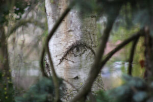 a tree with a knot on it that looks like an eye