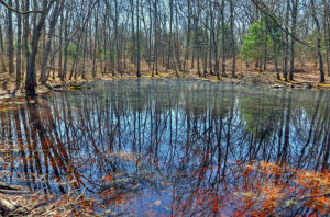 a New England pond flanked by trees