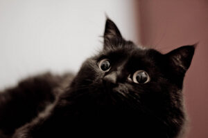 a black cat who looks very alarmed