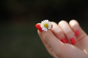 a hand with red fingernails holding a tiny daisy