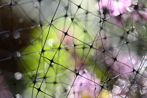 a net with some purple flowers