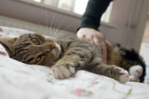 a cat being pet on a bed who looks jealous
