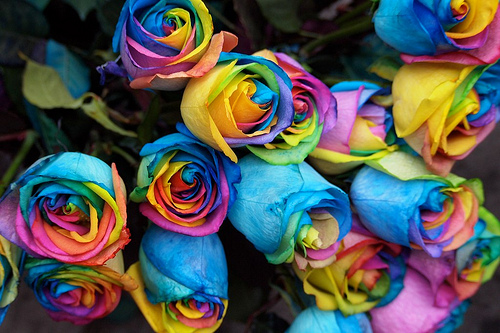 a dozen rainbow roses for gay, lesbian, bisexual, transgender pride