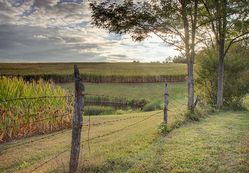 scenery from Ohio farmland with a collapsing barbed wire fence int the foreground