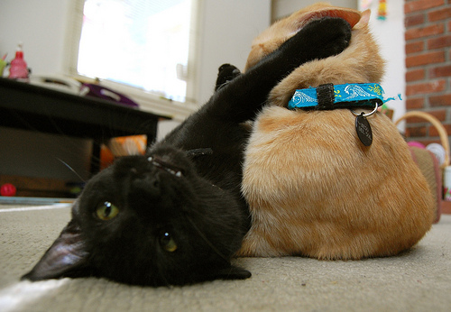 a black cat swiping at a tabby cat in an act of sibling rivalry