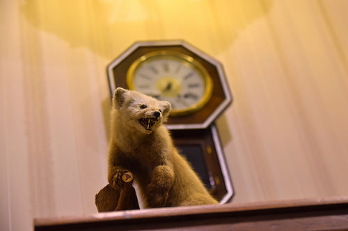 a picture of a taxidermied weasel on a mantle in front of a clock