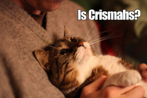 """picture of a cat being held against a person's chest - text reads """"is crishmahs?"""" this is a phonetic spelling of Christmas"""