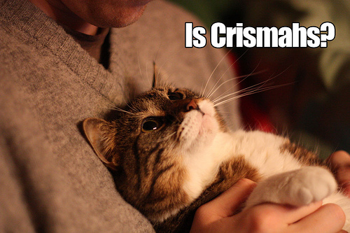 "picture of a cat being held against a person's chest - text reads ""is crishmahs?"" this is a phonetic spelling of Christmas"
