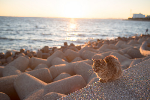 a cat sitting alone next to a breakwater wall next to a large body of water