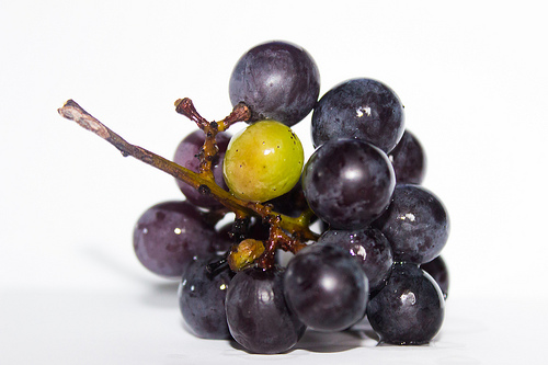 a bunch of purple grapes with one green one