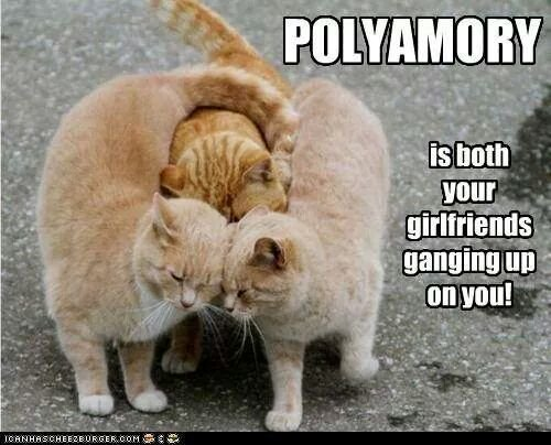 a photo of 3 tabby cats. the two ones of the side are smothering the middle one with cuddles. Text over images reads Polyamory is both of your girlfriends ganging up on you.