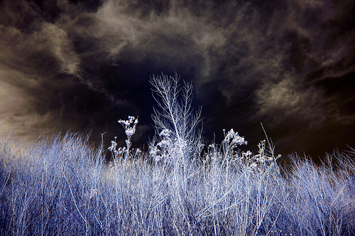 A black stormy sky and a close up shot of purple brush. It was shot in infrared according to the photographer.