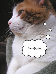 """A picture of a white cat with a brown top of its head, viewed from the side. The cat looks like it might be experiencing some jealousy. A cartoon thought bubble contains the words """"I'm cute, too"""""""