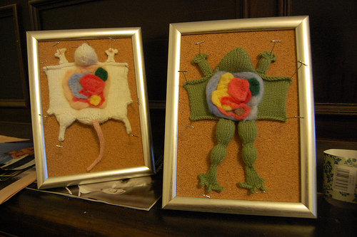 a knitted representation of a dissected rat and a dissected frog, each pinned to a corkboard