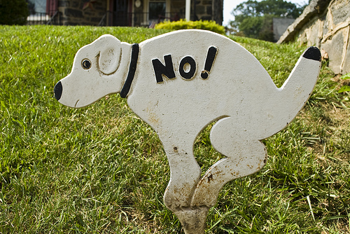 """a sign of a white dog, hunkered over as if it is about to poop, with the word """"No!"""" written on its back"""