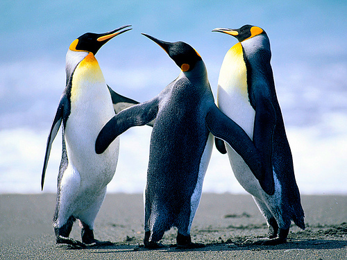 three penguins hanging out together
