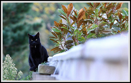 a black cat sitting on a fence lined with plants