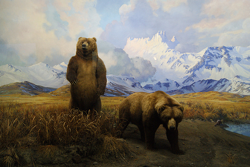 a painting of two grizzly bears on a plain with mountains and clouds in the background. The grizzly on the left is standing on two legs. The grizzly on the right is down on all fours.
