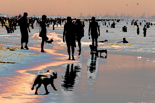 A beach. You can see the shadowy outlines of many people and even a dog, but their features are not visible.