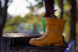 A muddy rubber boot with a flower growing out of it. The boot seems to be sitting on a tree stump in the middle of a forest.