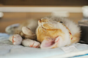 a tabby cat that is sleeping rather peacefully