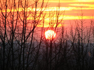 a sun setting behind a bunch of leafless trees