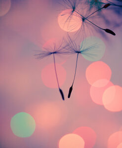 a closeup of a couple of dandelion seeds flying through the air superimposed on a pink background with bright circles of various colors in the background