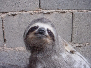 a sloth in front of a cement wall