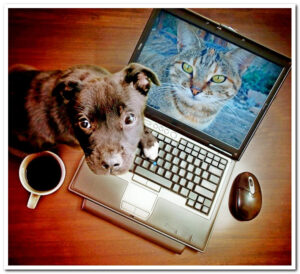 a dog with a cup of coffee who appears to have been caught looking at a laptop with a background image of a cat on it