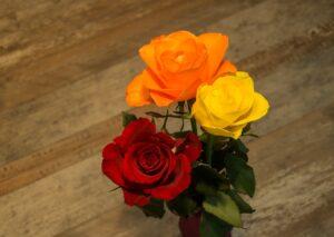 three roses: one red, one orange, one yellow