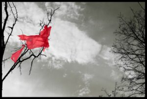 a black and white photo of a tree with red crepe paper stuck in its branches (the crepe paper is the only colorized thing in frame)