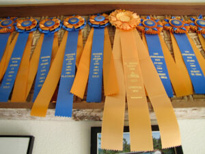 an assortment of gold and blue award ribbons