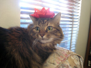a photograph of a cat with a bow on its head with an uncomfortable expression on its face