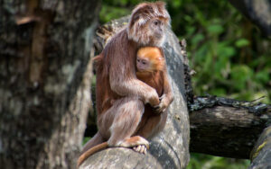 an adult monkey hugging a smaller baby monkey