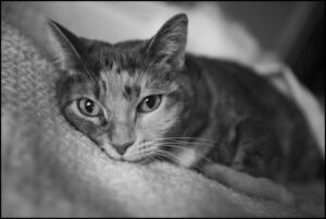 black and white photo of a cat lying on a blanket