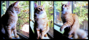 a triptych of cat pics