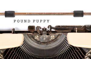 """a typewriter that has written the words """"POUND PUPPY"""""""