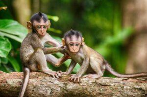 two monkeys sitting together on a log