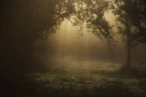 a misty forest clearing at dusk