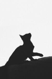 a cat seen in shadow