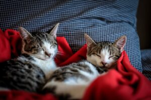 a couple of sleepy cats under a red blanket