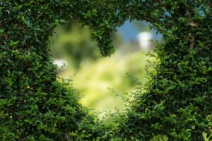 a heart shaped opened cut out of a hedge