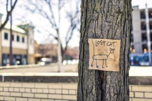 """a sign that says """"lost cat"""" and has a stick figure drawing of a cat attached to a tree"""