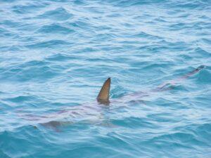 a shark fin