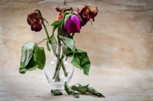 4 roses in a vase that are wilting and dying