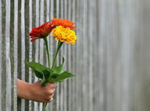 hand reaching through the fence holding flowers