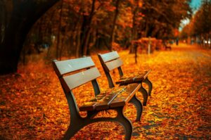 two benches in a park in which the trees have shed bright orange Autumn leaves on the ground