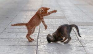 a couple of kittens fighting