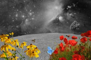 a black and white landscape background with trees and a sky full of stars. The foreground of the picture has colorful flowers and a colorful butterfly that contrasts sharply with that