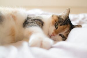 a cat lying on its side